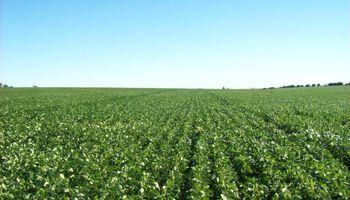 Se necesitan 270 trámites para administrar 200 hectáreas