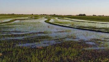 Las lluvias de noviembre dieron un respiro a la zona arrocera, que ahora planea aumentar la superficie de siembra