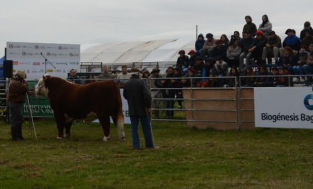 La tradicional muestra eligió nuevamente la localidad de Balcarce para mostrar lo más destacado en ganadería de precisión.