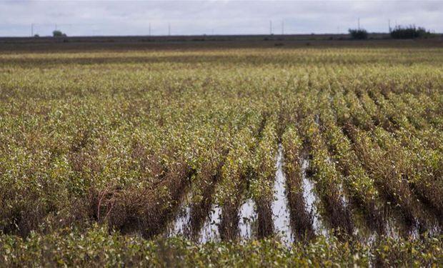 Escenario climático complejo para la producción agrícola.
