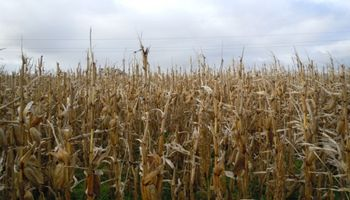Qué chances hay de un evento Niña y cómo podría impactar sobre los cultivos en Argentina