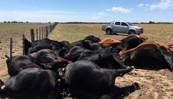 Una centella mató 22 vacas en un pueblo de La Pampa