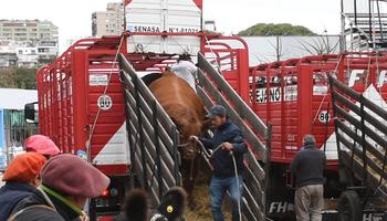 Cómo ingresan 4.000 animales en 2 días y la vaca que llegó al Jardín Japones