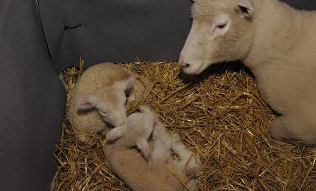 Nuevo nacimiento en La Rural: llegaron los mellizos.