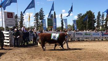 Precio récord para el gran campeón Hereford en La Rural de Río Cuarto