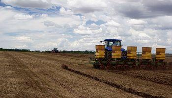 El trigo depende de un buen arranque