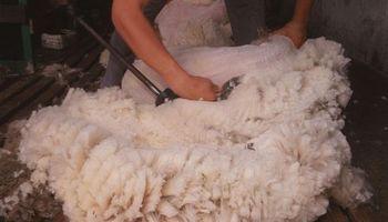 Uruguay: consorcio de productores busca certificar sus lanas