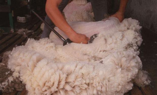 Las lanas producidas por el Crilu están en el segmento de 15, 8 micras. Foto: A. Colmegna