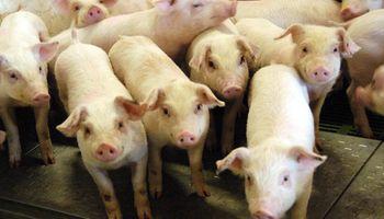Consumo interno y exportación, los dos frentes para hacer crecer el sector porcino