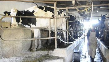 Cae fuerte exportación de lácteos en Uruguay