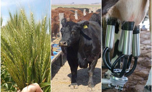 Granos, leche y carne: ¿En qué andan las empresas agropecuarias con el actual contexto?