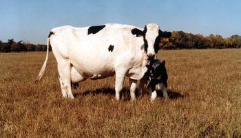 Argentina encabeza el ránking de crecimiento en producción de leche