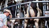 Competitividad, exportaciones y calidad de la leche: los ejes que planteó el Gobierno para el sector lácteo