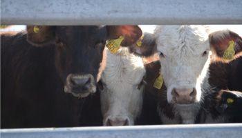 La lechería hace pie en AgroActiva