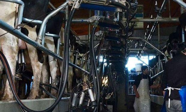 En Rosario, la Facultad de Ciencias Agrarias donará 10.000 litros de leche del Módulo Tambo
