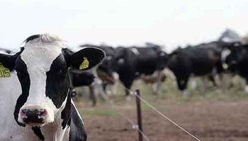 Empresas lecheras: habría mayor endeudamiento