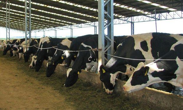 En términos de mercado, el valor para la leche en polvo trepó en más de una oportunidad a 5000 dólares la tonelada.