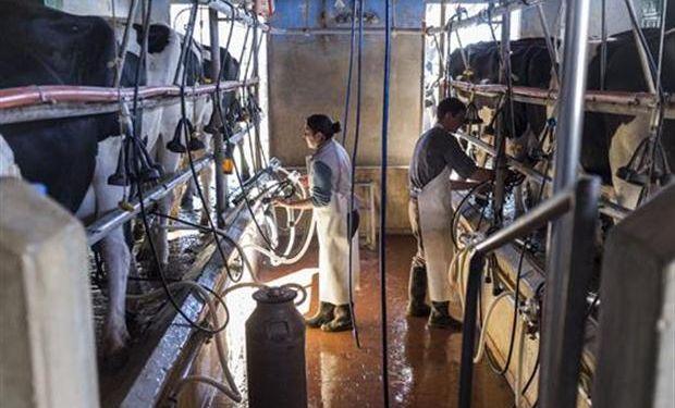 Pagarán un subsidio de $ 400 por vaca a los tamberos cordobeses.
