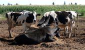 Pedirán que la lechería tenga tratamiento de economía regional