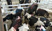 """La lechería, en peligro de extinción: """"Con los $21,36 por litro no se llega a cubrir los costos de producción"""""""