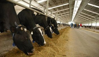 Innovación láctea: desde el tambo robótico más grande del mundo hasta un sistema de ordeño de 24 horas al día