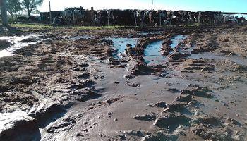 Baja el agua y aparece el reclamo: productores de Santa Fe reiteran el pedido de obras luego de estar inundados