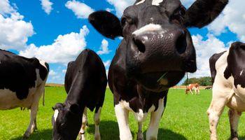 Innovación láctea: qué tecnologías se están aplicando en el mundo