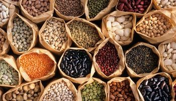Las legumbres, una cadena de valor a fortalecer en Argentina