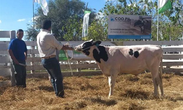 De la subasta, concretada en las instalaciones que la Cooperativa Guillermo Lehmann posee en Rafaela, participaron reconocidos centros de inseminación animal y más de 120 productores de una amplia región.