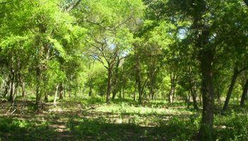 Córdoba: se profundizan las diferencias por la ley de bosques
