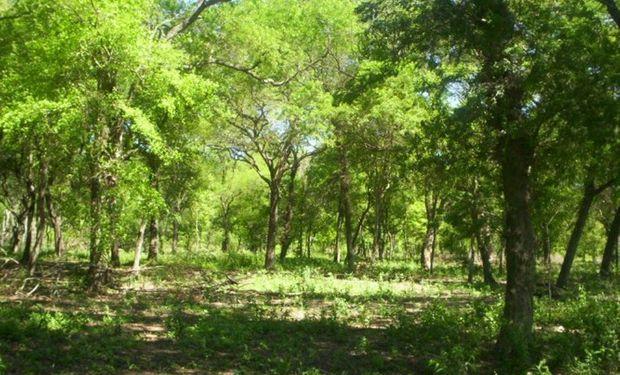 Polémica en Córdoba por los bosques nativos.