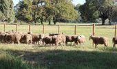 Entre Ríos presentó un proyecto de ley para potenciar la producción ovina y caprina
