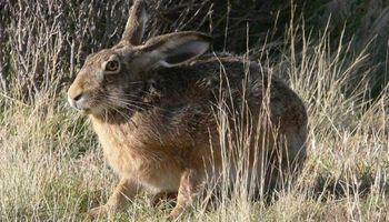Abren la temporada de caza menor en Buenos Aires: los requisitos
