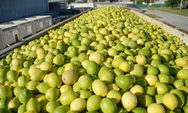 Quedó oficialmente abierto el mercado de limones a China y las empresas ya preparan sus primeros envíos