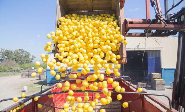 Tucumán es el primer productor del mundo de limones.