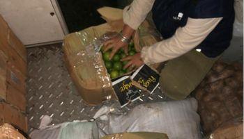 Destruyeron más de 600 kilos de limones para prevenir su enfermedad más destructiva