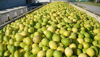 Argentina exportará limones y chía a India y busca sumar nuevos productos