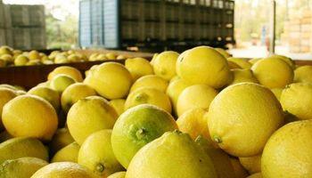 Limones a USA: le bajan un cambio al anuncio