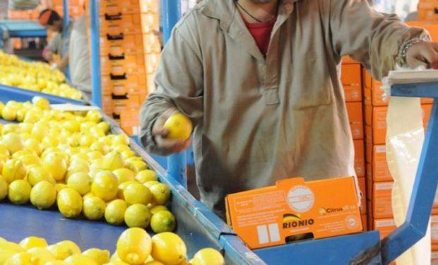 Tucumán concentra el 90% de las 50.000 hectáreas implantadas con limoneros en el país.