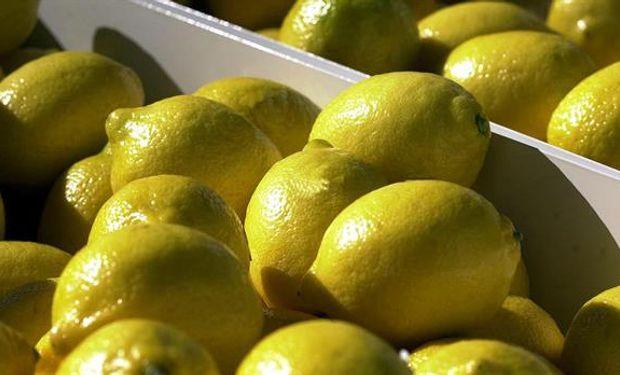 """EEUU considerará """"seriamente"""" el reingreso de limones argentinos."""