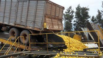 Destacan que el complejo limonero es el sector más competitivo de la economía argentina