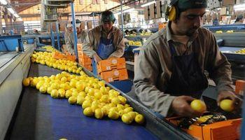 Limones: por una menor producción en España, esperan exportar más a Europa