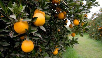 Argentina logró la apertura de los mercados de naranjas, limones y ajos a Colombia