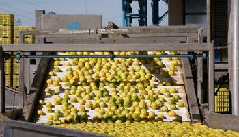 La Argentina quedó a un paso de exportar limones a México