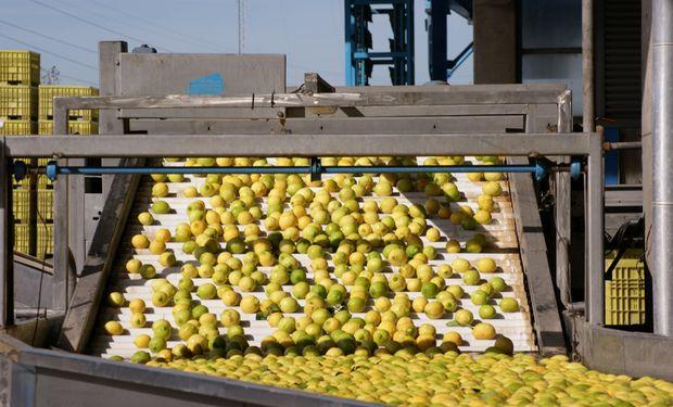 Desde el sector privado calcularon que la Argentina podría empezar vendiendo a México unas 10.000 toneladas de limón.