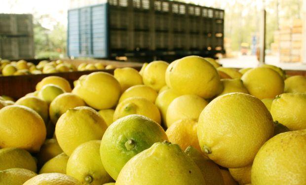 Argentina podrá volver a exportar limones a Estados Unidos.