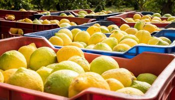 Estados Unidos extendió la suspensión del ingreso de los limones argentinos
