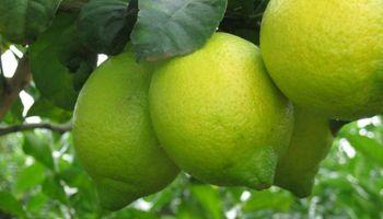 El país pedirá a Obama por el ingreso de limones a EEUU