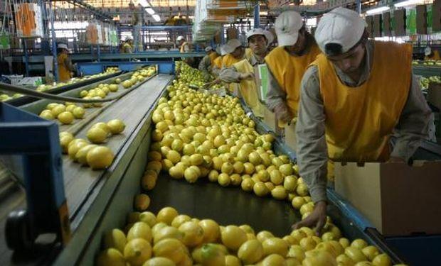 Tucumán es el primer exportador de limones a nivel mundial.