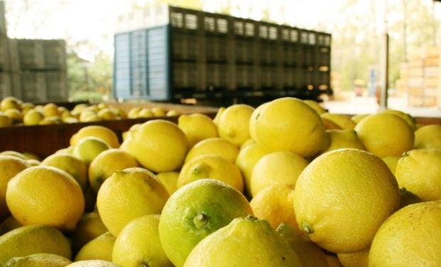 Limones del NOA podrán ingresar a Estados Unidos.